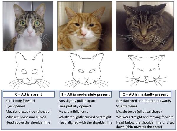 Illustration and description of the Feline Grimace Scale.