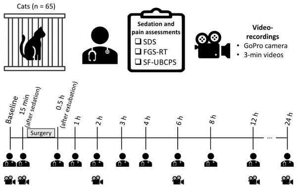 Timeline of the study and the time-points for sedation and pain assessments in real-time and video-recordings.