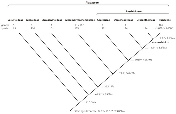 Phylogeny of Aizoaceae.