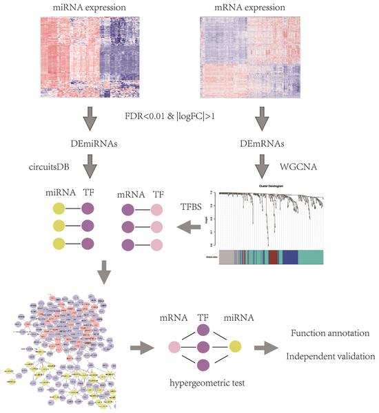 The flowchart of identification of key mRNAs and mRNA-interacting miRNAs.