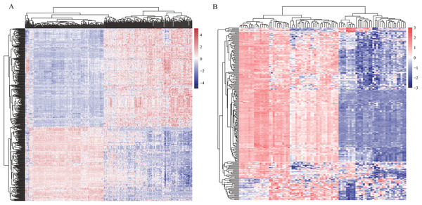 Heatmaps of profiles GSE36376 (A) and GSE36915 (B) from GEO database.