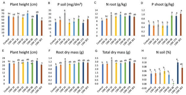 Performance of the selected strains in greenhouse experiment.