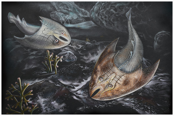 Life restoration of Sinogaleaspis shankouensis (left) and Rumporostralis xikengensis (right) in a fresh river.