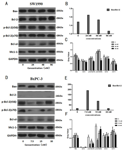 The western blot results of Bax and Bcl-2 protein family for SW1990 and BxPC-3 cells.