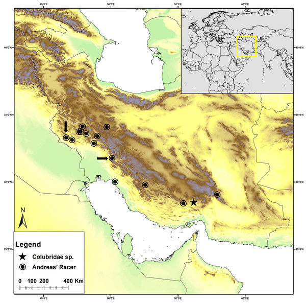 Distribution map of Persiophis fahimii. Gen. et sp. nov. (star) and Hierophis andreanus (circle) in Iran.