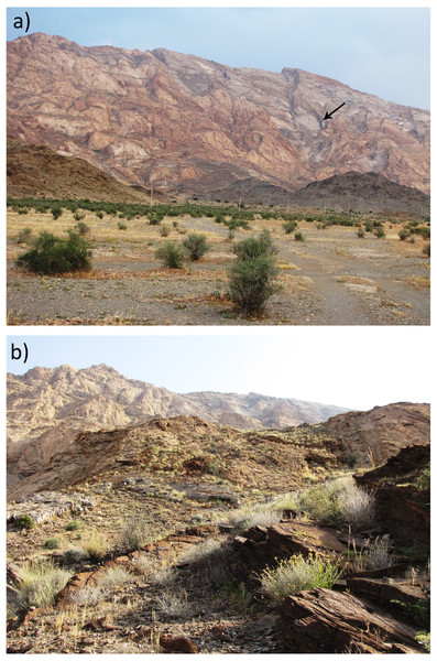 Habitat of Persiophis fahimii. Gen. et sp. nov. at the type locality in vicinity of Orzueeyeh City, Kerman Province, Southern Iran.