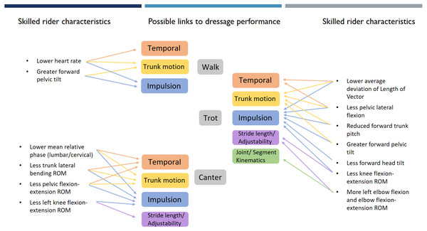 Objective measures of skilled rider characteristics grouped by gait with arrows showing theoretical links to horse performance themes.