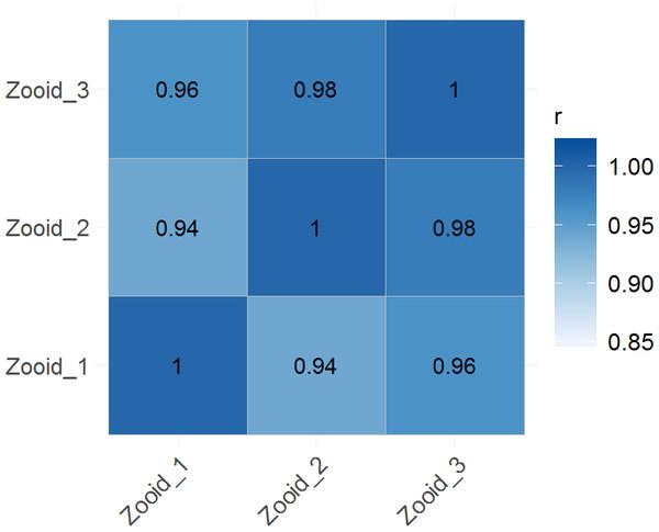 Global correlation analysis.