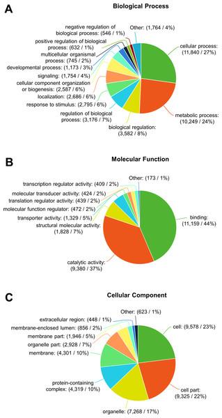 Gene ontology annotation of F. sultana transcripts.