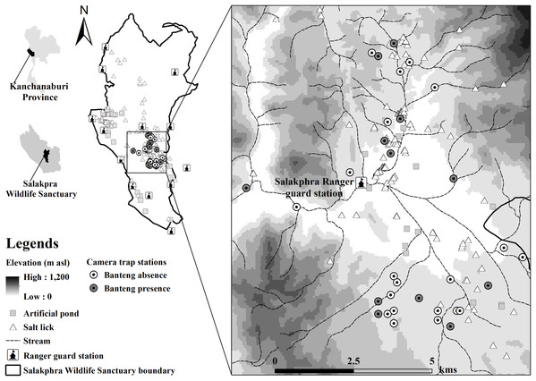 Location of banteng (Bos javanicus) presence and camera stations in the Salakphra Wildlife Sanctuary.