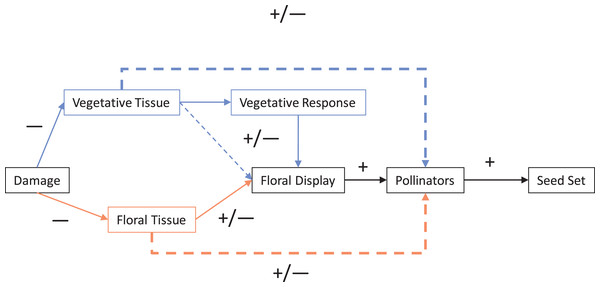 Mechanisms of damage by herbivores that can impact pollination and therefore seed set.