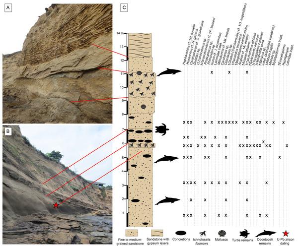 Stratigraphic context of the Montañita-Olón site.