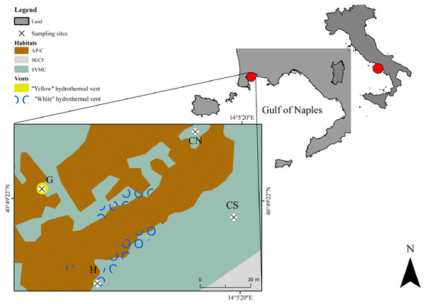 Map showing the location of the sampling area Secca delle Fumose in underwater park of Baia MPA located in the Gulf of Naples (Tyrrhenian Sea, Italy).