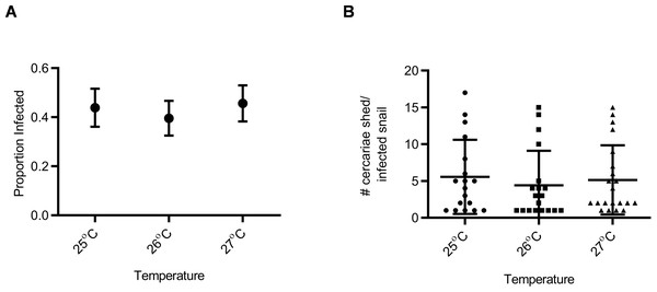 Susceptibility and cercarial shedding of BgGUA is not altered by multigenerational maintenance at elevated temperature.