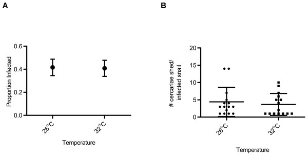 Susceptibility and cercarial shedding of BgGUA is not altered by 6 h heat pulse prior to schistosome challenge.