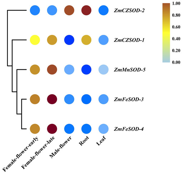 Expression profiles of ZmSOD genes in different tissues.