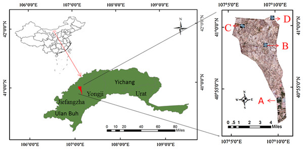 The distribution of sampling point.