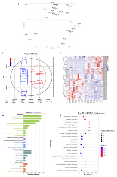 Separating postoperative samples from preoperative samples by metabolic profiling analysis.
