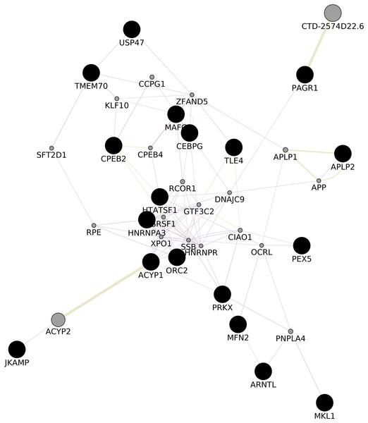 GGI Network.