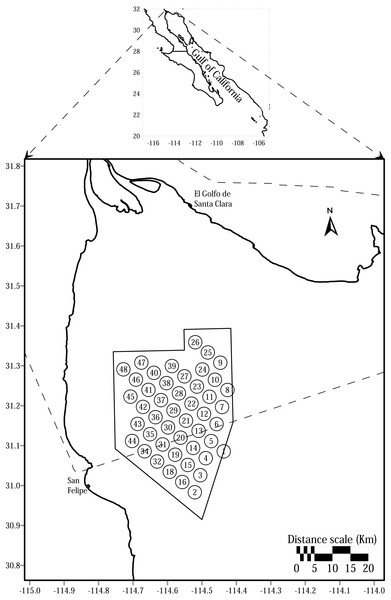 Sampling sites in the Vaquita Refuge located in the northern of Gulf of California, Mexico.