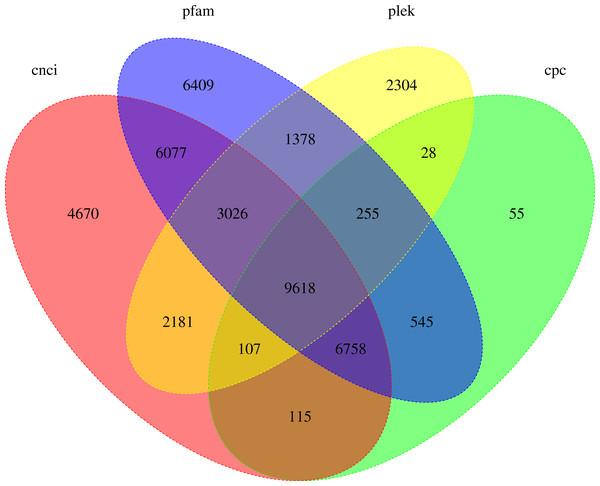 Venn diagram of lncRNA transcripts identified from PLEK, CNCI, CPC and Pfam.