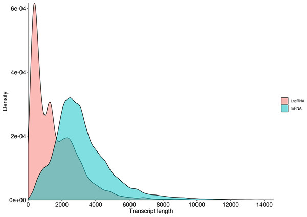 Length distribution of LncRNA and mRNA in R. ferrugineus.