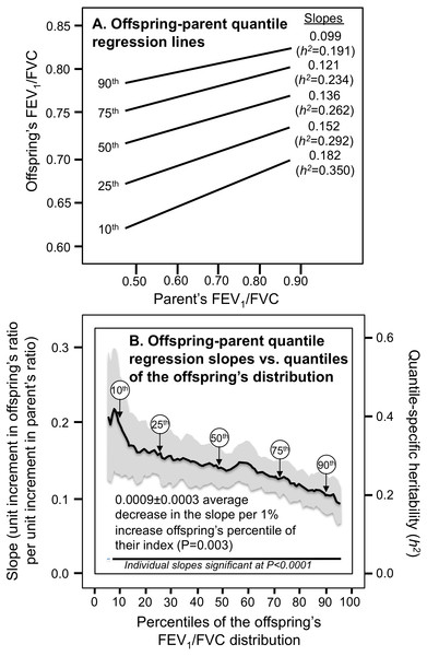 Offspring-parent regression slopes (βOP) for selected quantiles of the offsprings' FEV1/FVC ratio (10th, 25th, 50th, 75th, 90th).