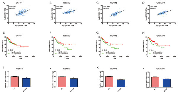 USP11, RBM10, WDR45 and GRIPAP1 have associated with OTUD5.