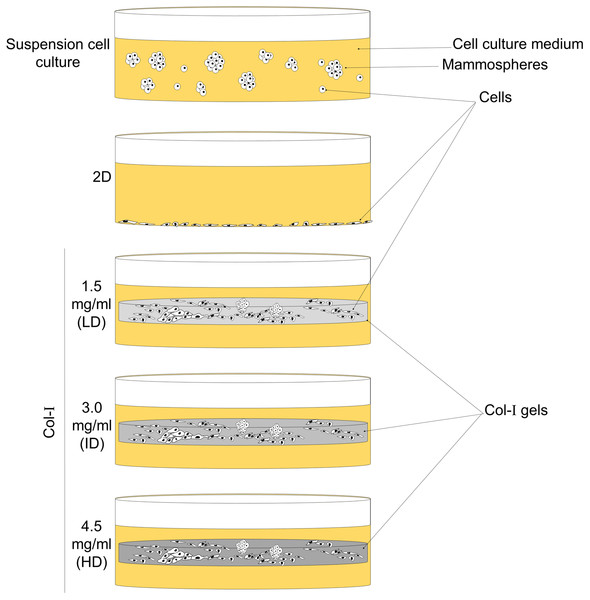 Scheme of cell culture environments used in this study.