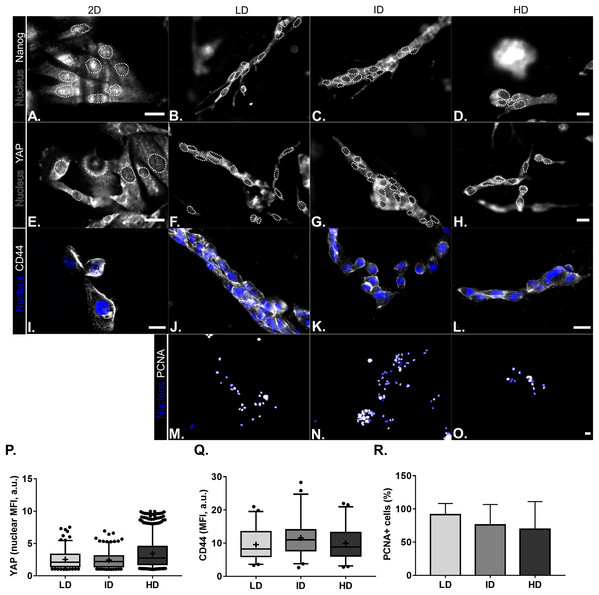 Immunofluorescence of CSC-related, mechanotransduction and proliferation markers from MDA-MB-231 cells cultured on a 2D surface or within Col-I gels.