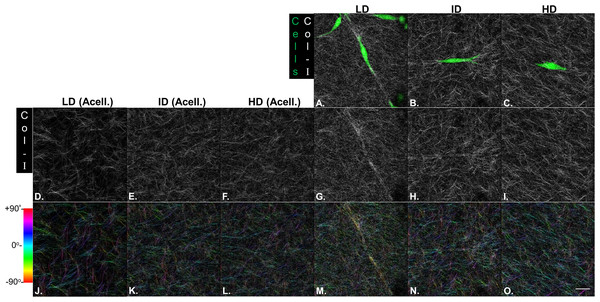 Microstructure analysis of Col-I fibers by confocal reflectance.