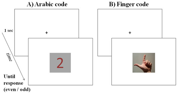 Example of a trial in Experiment 2: after a fixation cross presented for 1 s, a stimulus was presented in the center of the screen until the participant categorized it as even or odd: in the figure, the magnitude 2 is presented in Arabic code (A) and in finger code (B: left-hand stimulus in palm-up posture).