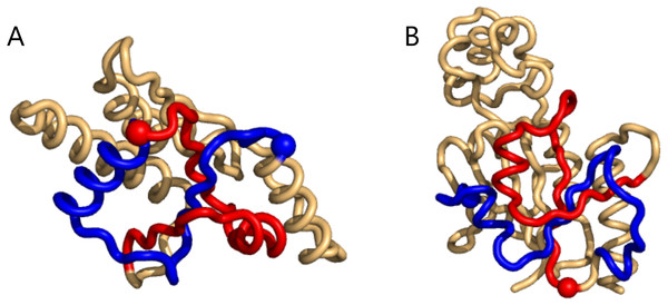 Two cases of particularly high mutual writhe value between the blue and the red sub-chains.