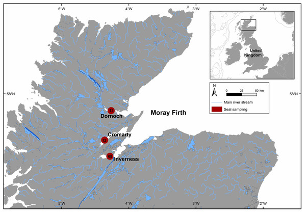 Mean geographic location of the three areas sampled (Dornoch –13 individuals, Cromarty –12 individuals and Inverness –68 individuals) from Moray Firth in north-east Scotland.
