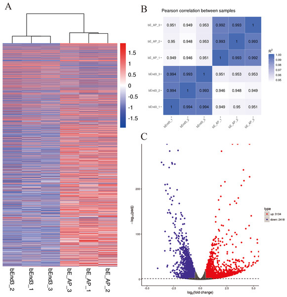 Differential expression overview profiles of bEnd.3 cells transcriptome data.