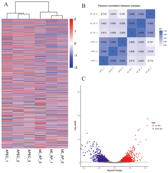 Differential expression overview profiles of APEC strain transcriptome data.