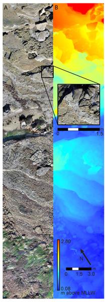 Survey plot orthophotomosaic and Digital Elevation Model (DEM).