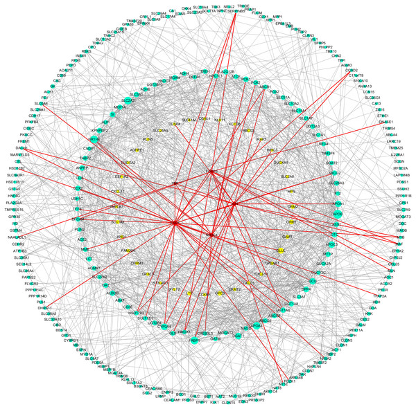 DEGs-TFs regulatory network involved in Hp+-AG-IM.