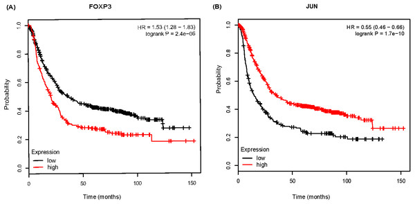 The Kaplan-Meier survival curve of 882 gastric cancer (GC) patients based on FOXP3 (A), JUN (B) in Kmplot software.