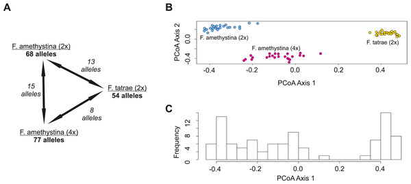 Genetic similarity between studied populations of F. amethystina and F. tatrae based on 10 SSR polymorphic loci.