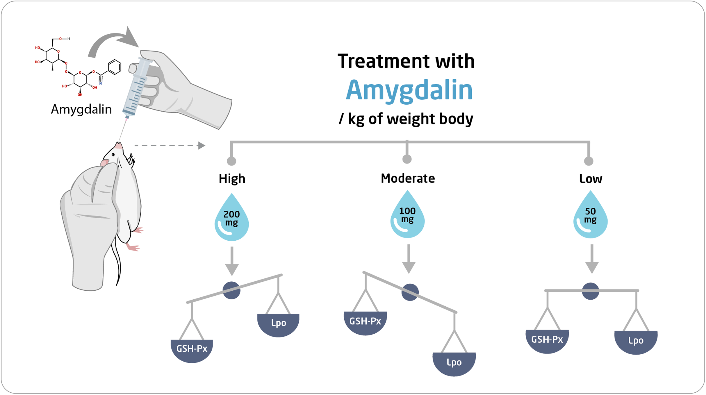 Evaluation Of The Effective Dose Of Amygdalin For The Improvement