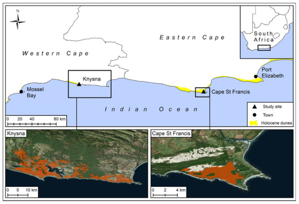 The two study sites, Knysna and Cape St. Francis, that burnt and the extent of Holocene dunes along the southeast coast of the Cape Floristic Region.