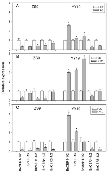 Effects of SA (A), MeJA (B) and ACC (C) on cuticular wax associated gene expression in Zhongshuang 9 (ZS9) and Yuyou 19 (YY19).