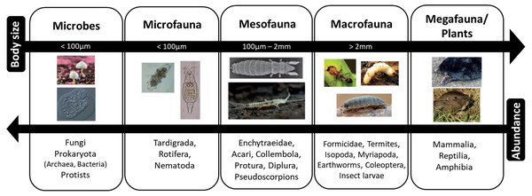 Size classification of soil organisms.