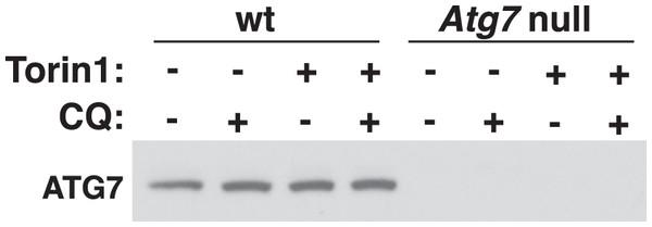 Example of implicit antibody validation.