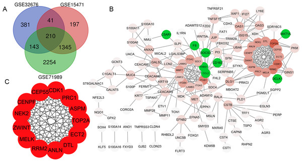 Venn diagram, PPI network and the most significant modules of DEG.