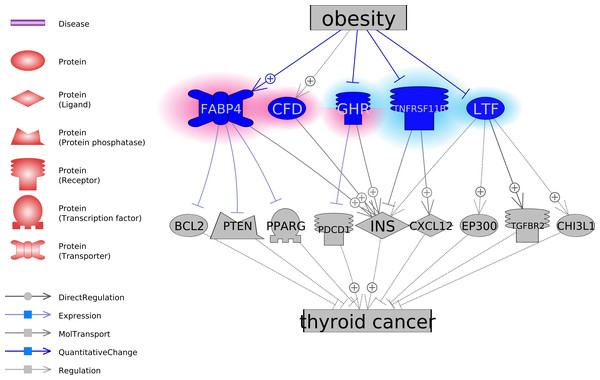 The potential pathways connecting the five obesity-regulated genes and thyroid cancer.