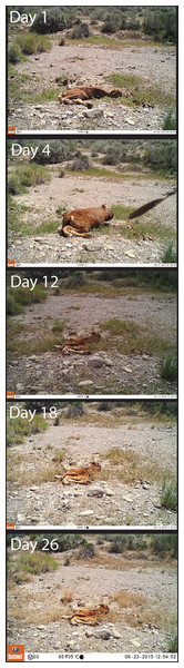 Photographs of the decomposition progression at one of the seven sites.