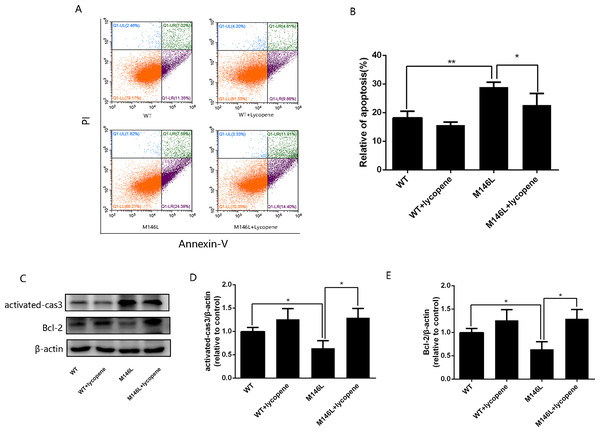 Lycopenealleviated apoptosis in M146L cells.