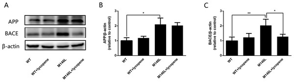 Lycopene inhibits BACE activity in M146L cells.
